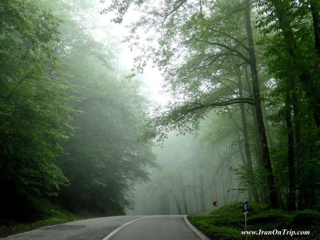 Abbas Abad Forests in Iran