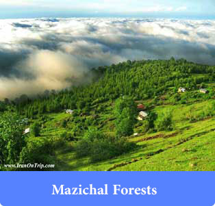 Mazichal Forests - Forests of Iran