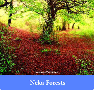 Neka Forests - Forests of iran