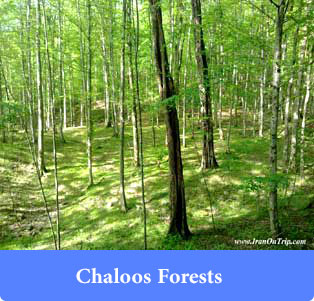 Chaloos Forests - Forests of Iran